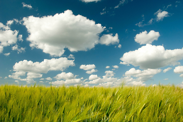 A peaceful picture of clouds over a field